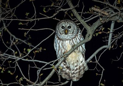 Squirming The Worm - Owls 23.10.15 Radio Episode
