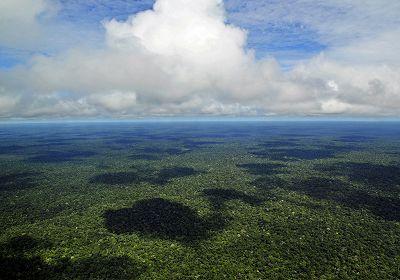 Edge Of The Forest - Peruvian Amazon 15.01.16 Radio Episode